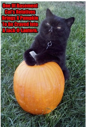 One Of Basement Cat's Relatives Brings A Pumpkin To Be Craved Into A Jack-O-Lantern.