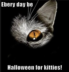 Ebery day be  Halloween for kitties!