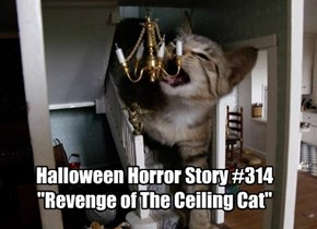 "Halloween Horror Story #314 ""Revenge of The Ceiling Cat"""
