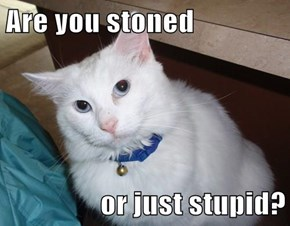 Are you stoned  or just stupid?