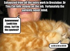 Dr Tiny Cat is theraputic at all times.