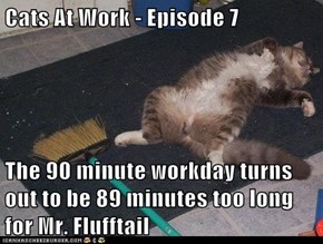 Cats At Work - Episode 7  The 90 minute workday turns out to be 89 minutes too long for Mr. Flufftail