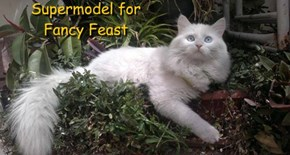Supermodel for  Fancy Feast