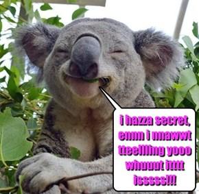 i nawt no koala bears can sing!!!
