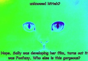 unknowed kitteh?  Nope. Sally was developing her film, turns out it was Foofany. Who else is this gorgeous?