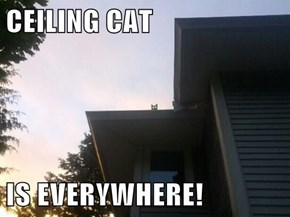 CEILING CAT  IS EVERYWHERE!