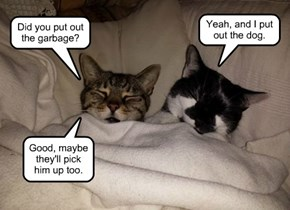 Did you put out the garbage?
