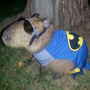 Everyone Wants to Be Batman