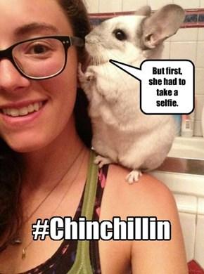 That's One Fine Chinchilla