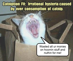 Catniption  Fit:   Irrational  hysteria caused  by  over  consumption  of  catnip.