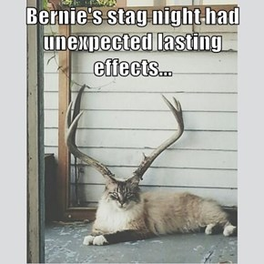Bernie's stag night had unexpected lasting effects...