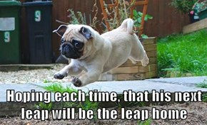 Hoping each time, that his next leap will be the leap home