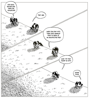 The Truth About Cows' Spots