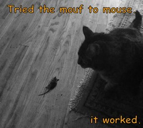 Tried the mouf to mouse.   it worked.
