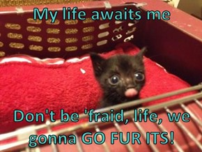 My life awaits me  Don't be 'fraid, life, we gonna GO FUR ITS!