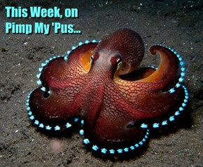 ...we'll install underglow lights on a coconut octopus wannabe!