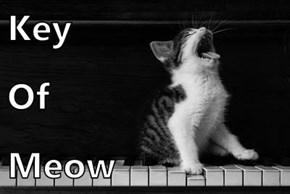 Key  Of Meow