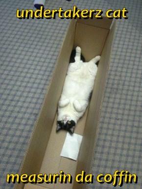 undertakerz cat  measurin da coffin