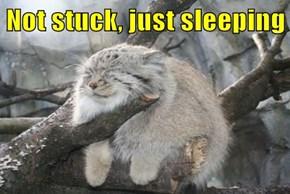 Not stuck, just sleeping