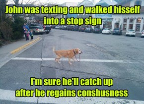 Don't Text and Walk Your Pup