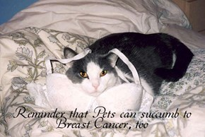 Reminder that Pets can succumb to Breast Cancer