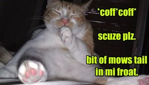 *coff*coff*  scuze plz.  bit of mows tail in mi froat.