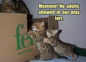 Mommm!  No  adults  allowed  in  our  play  fort.