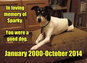 In loving memory of Sparky.