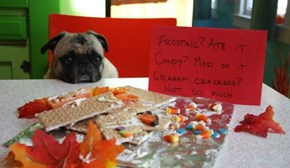 This Pug is Just Getting into Holiday Form