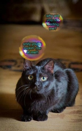 Cat Thoughts Come in Rainbow Bubbles