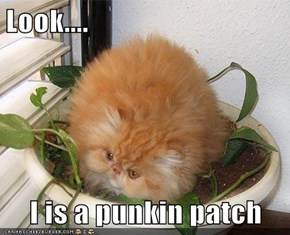 Look....  I is a punkin patch