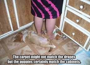 The carpet might not match the drapes  but the puppies certainly match the cabinets.