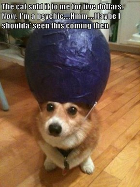 Psychic Corgi Gets Psyched