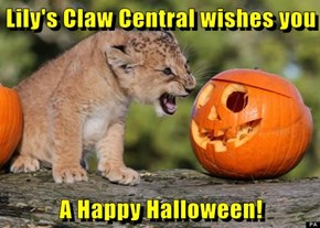 Lily's Claw Central wishes you  A Happy Halloween!