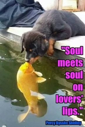 """Soul meets soul  on lovers' lips."""