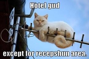 Hotel gud  except for recepshun area.