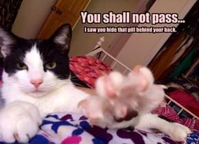 Gandalf the Cat says...