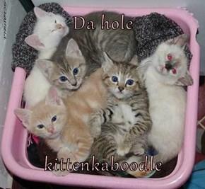 Da hole  kittenkaboodle
