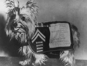 """Meet Smoky, a World War II Veteran and """"The Best Mascot in the South Pacific"""""""