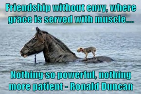 Friendship without envy, where grace is served with muscle....  Nothing so powerful, nothing more patient - Ronald Duncan