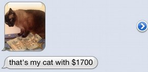 My Life Revolves Around Cats and Money