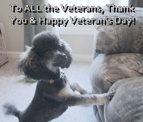 To ALL the Veterans, Thank You & Happy Veteran's Day!