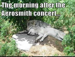 The morning after the Aerosmith concert...