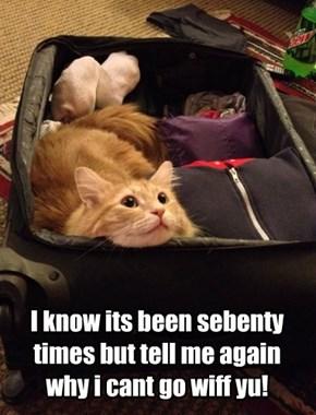 Meow X sebenty!