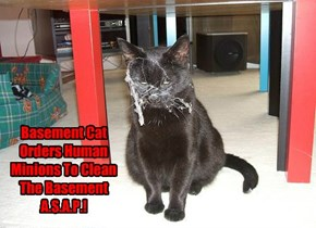Basement Cat Orders Human Minions To Clean The Basement A.S.A.P.!