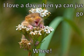 I love a day when ya can jus go  Whee!