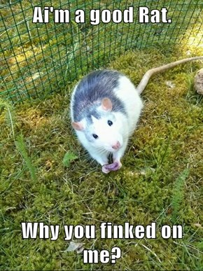 Ai'm a good Rat.   Why you finked on me?