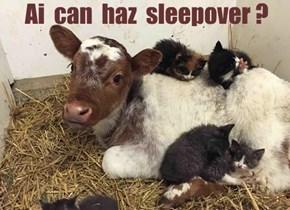 Ai  can  haz  sleepover ?