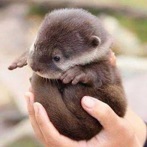 When This Baby DJs, You Have No Otter Music Choice