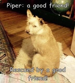 Piper: a good friend!  Rescued by a good friend!